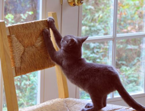 Cat Scratching: The Do's & Dont's