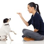 dog training, dog training springfield, va, dog training sterling, va, dog training north bethesda, md