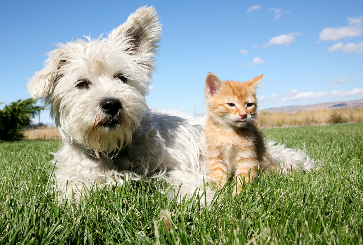 pet care, pet care springfield, va, pet care sterling, va, pet care north bethesda, md
