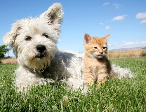 Flea and Tick Prevention