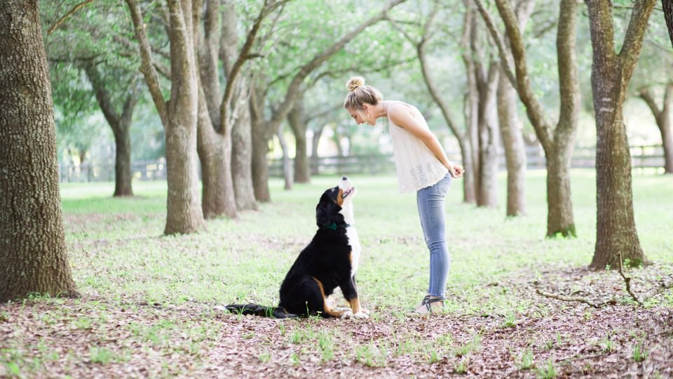 Dog training, dog boarding